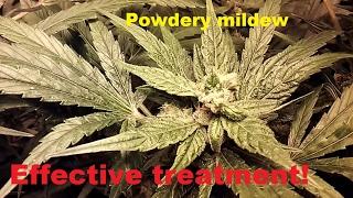 Effective Treatment of Powdery Mildew - 3 Treatment Update