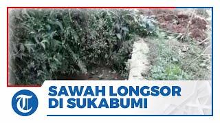 Penampakan Sawah Longsor Timbun Aliran Air di Sukabumi, Pasokan Air Warga Jadi Terhenti