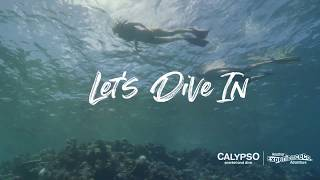 Lets Dive In - travel to the Outer Great Barrier Reef with Calypso, visiting 3 spectacular reef sites daily.