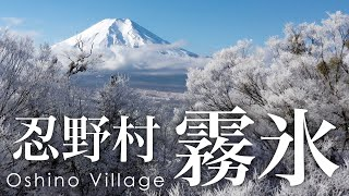 絶景空撮 忍野村の霧氷 - Aerial view of Rime ice at Oshino Village