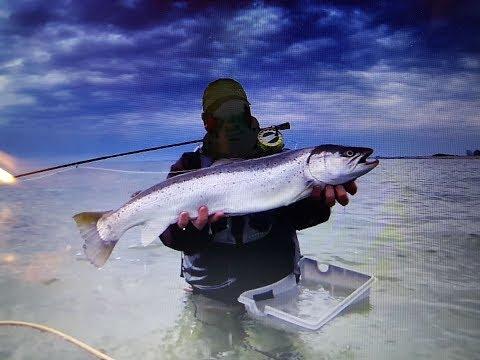 Was für eine Meerforelle, mit der Fliegenrute in der Ostsee gefangen.seatrout Fliegenfischen