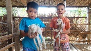 Trò Chơi Cho Dê Ăn Cỏ ❤ Surich ToysReview ❤ Real Animal For Kids Đồ Chơi Trẻ Em