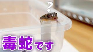 かわいいけど取扱注意な蛇