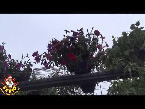 Portal de Flores na Praça de São Lourenço da Serra Ficou bonito , mais as Plantas já estão Morrendo