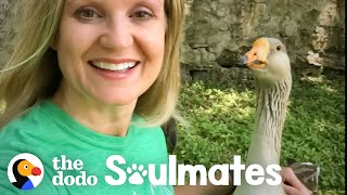 Goose Picks This Lady To Be His Mom    The Dodo Soulmates