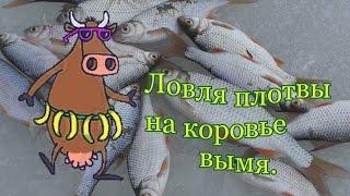 Что такое ловля рыбы на вымя летом
