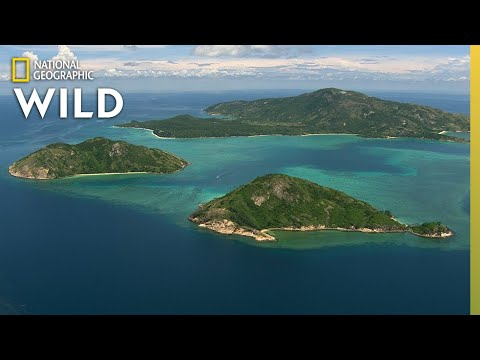How the Great Barrier Reef Formed | Great Barrier Reef