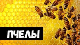 К чему снятся Пчелы видео -К чему снятся Пчелы или видеть Пчелу во сне