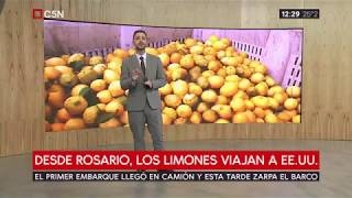 Preocupación en el sector de la citricultura por el HLB