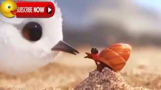Забавная история про птичку \ A funny story about a bird