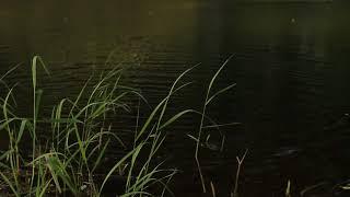поклёвка карася в ветреную погоду на небольшом болотце