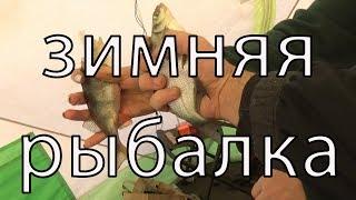Белоярка рыбалка 2019 отчет за неделю