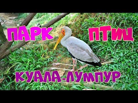 🌴Малайзия🌴Куала-Лумпур🐦Парк птиц🐣Декабрь🏦Kuala-Lumpur❤️Bird park🐦Самый красивый парк птиц в мире👍