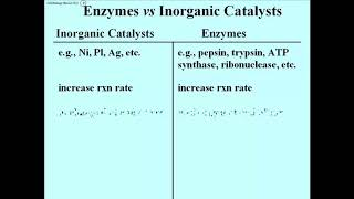 145 Enzymes vs Other Catalysts
