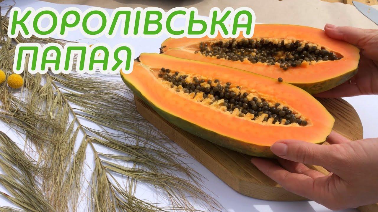 Папайя королевская: видео 1 - FreshMart