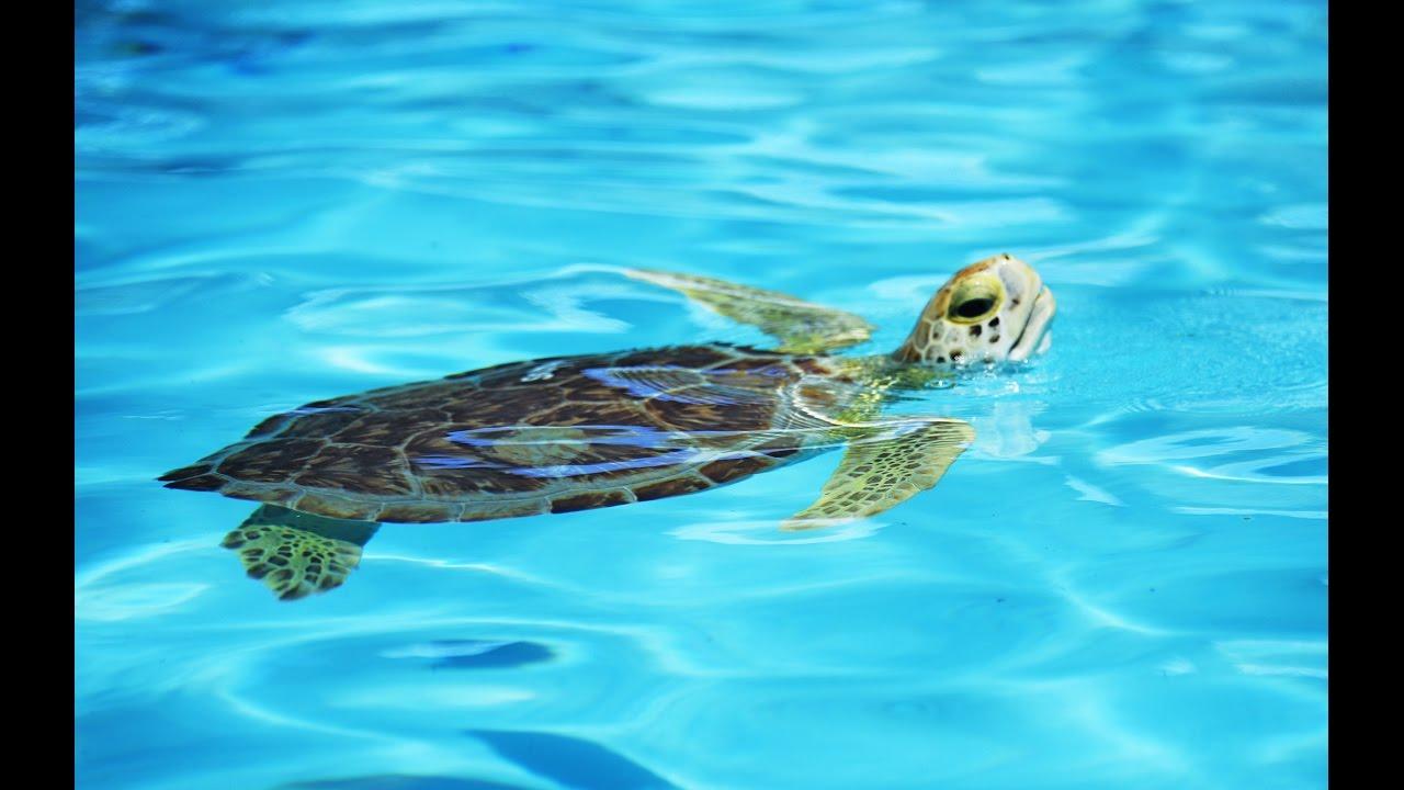 The Florida Keys The Sea Turtle Hospital On Marathon Visit Florida
