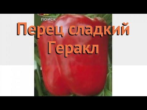 Перец сладкий Геракл (gerakl gerakl) 🌿 сладкий перец Геракл обзор: как сажать, семена перца Геракл