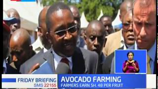 Avocado Farming: Murang'a County signs MoU with Kakuzi, farmers earn Sh. 48 per fruit