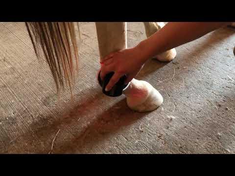 Fare la disabilità nella gonartrosi dellarticolazione del ginocchio