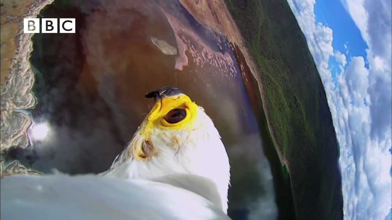 This Video Will Make You Want To Be An Eagle