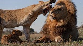 Смотреть онлайн Опасные животные: оружие хищников