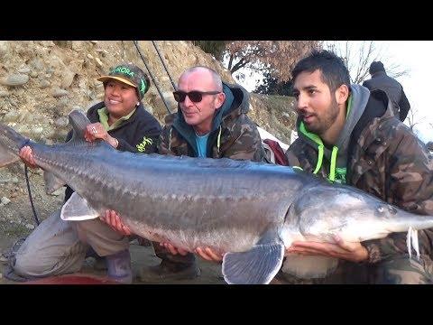 Pesca di karpovy di video e impianti