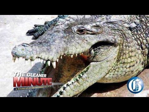 THE GLEANER MINUTE: Lawyer's murder probe intensifies... Man survives croc attack...