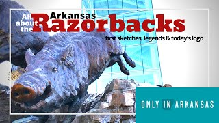 The Evolution Of The Arkansas Razorback - Only In Arkansas