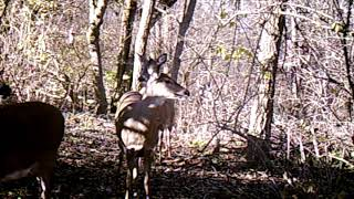 Trail Cam Pic 12 Deer Running...anyone ever seen so many?