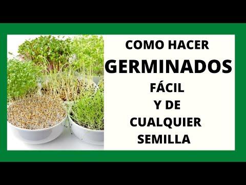 COMO HACER GERMINADOS FÁCIL Y DE CUALQUIER SEMILLA/ gotitadeaguaadm
