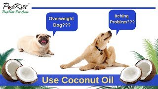 Coconut Oil - Dog's Best Friend | Used for Joint Problems, Itching & Weight Loss