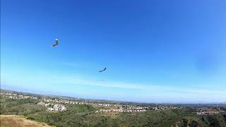 RotorRats and Lost Wing Gang - FPV Wing Formation Flying