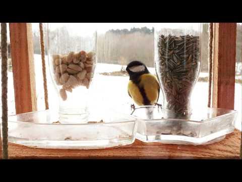 Erdnüsse vs Sonnenblumenkerne | Wer gewinnt? | Vogelfutter im Test