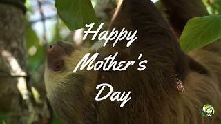Happy (Sloth) Mother's Day from Toucan Rescue Ranch!