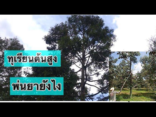 Ep66 (Durian)ทุเรียนต้นสูงใหญ่ฉีดพ่นยาอย่างไร และตัวยาที่ใช้