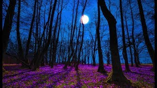 Good Night Music | Tranquil Deep Sleep Music | Calming Music for Sleeping | Peaceful Sweet Dreams