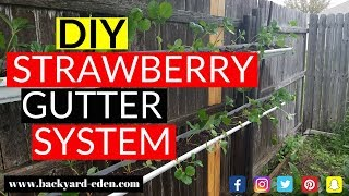 DIY Strawberry Gutter System | Easiest Way To Grow Strawberries