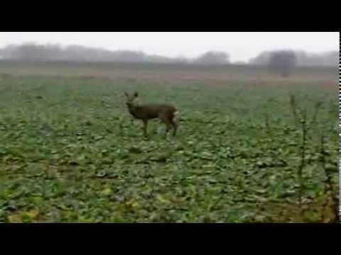 Strange Deer Near The Fishing Pond
