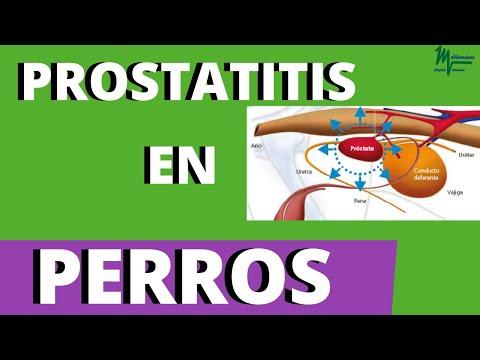 Prostatitis Malysheva- tól
