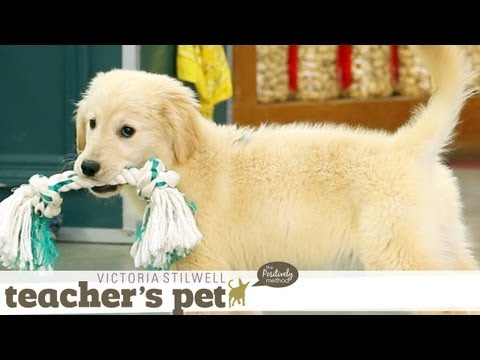 Puppy Mouthing (Training Basics)   Teacher's Pet With Victoria Stilwell