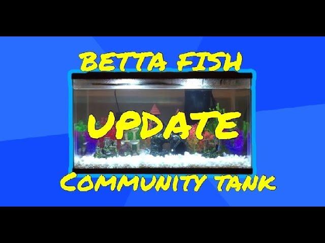 Betta Fish Community Tank UPDATE!