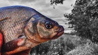 Ловля леща на фидер осенью. Фидер на реке. Вкусный обед на рыбалке.
