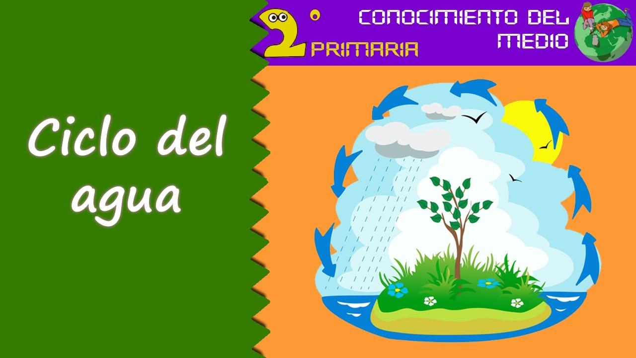Cono, 2º Primaria. Tema 7. El ciclo del agua
