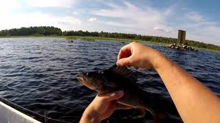 koukku ylös kingfish