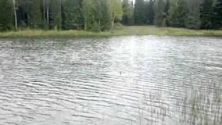 Рыбалка в свердловской области шалинский район