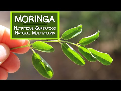 Video Moringa, A Nutritious Superfood and Natural Multivitamin