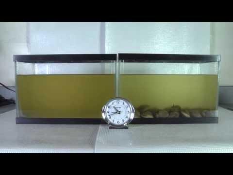 Gold fish parasites