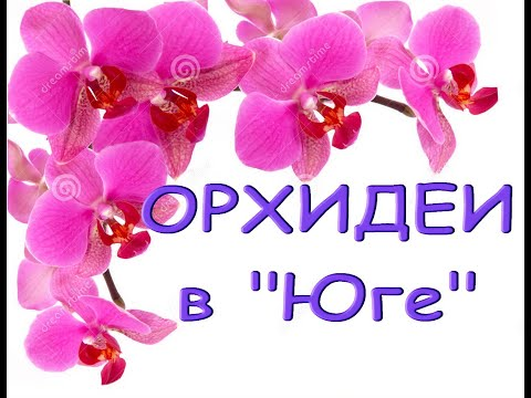 """Орхидеи-УЦЕНКИ за 275р.,ЗАВОЗ в """"Юге"""",02.04.21,ул.Авиационаая,8,Самара."""