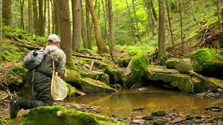 Searching for them Brookies | Fly Fishing Small PA Streams