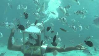preview picture of video 'Solarseawalk & Underseawalk in Mauritius'